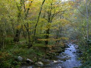 Asturies va acoyer el tercer Congresu Nacional d'Ecoturismu, que se va celebrar en Cangas del Narcea en payares