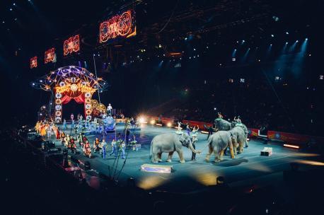 Circu con animales