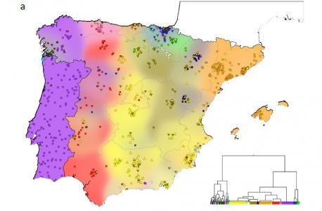 Mapa estudiu xenéticu Península Ibérica