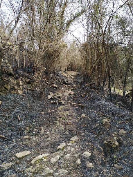 Asturies rexistró 380 quemes nuna selmana